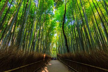 Bamboo Groves.