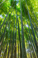 Bamboo Groves.