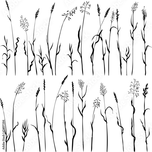 Set of grass silhouettes - 74117284