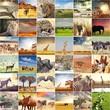 Fototapete Afrika - Abenteuer - Säugetiere
