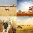 Fototapete Afrika - Afrikanisch - Säugetiere