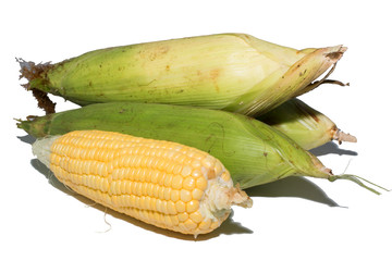 Sweet corn isolated on white background