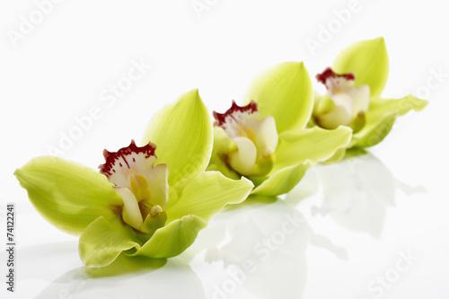 Grün Gelbe Orchideen (Orchidaceae)