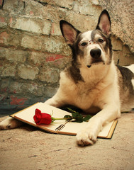 Malamute dog wearing glasses laying with a book and a red rose.