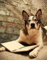 Large Dog Wearing Glasses Reading a Book