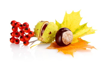 Group of many chestnuts with autumn leaves