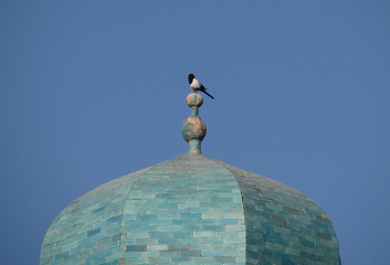 crow on the dome