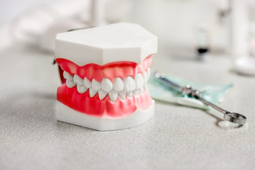 Artificial jaw in the dental office
