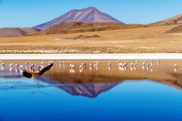 Laguna Bolivia landing flamingo
