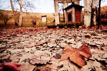 Foglie per terra in autunno