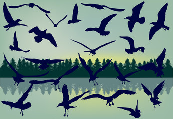 gull collection on landscape background
