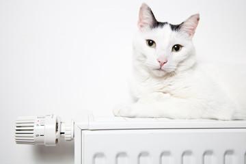 Katze liegt auf der heizung