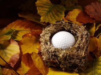 Golf Ball in a Bird's Nest