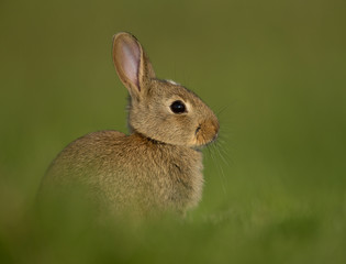 Bunny in the meadow