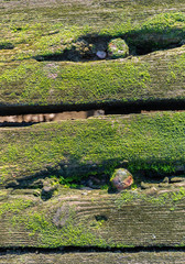 Old mossy planks from close