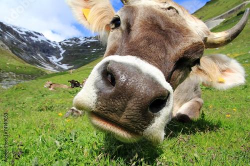 Foto op Aluminium Koe Hübsche Milchkuh in den Bergen
