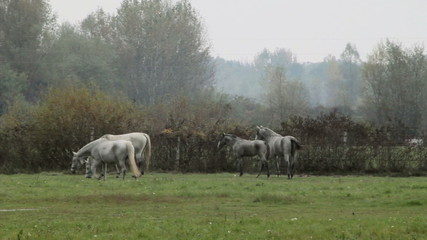 Horses on the Pasture Field