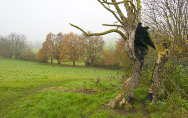 Trees in a foggy meadow on a hill in autumn