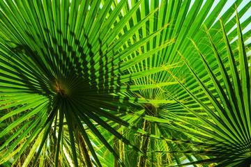 Grüne Palmblätter im Sonnenschein