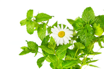 Mint and daisy flower