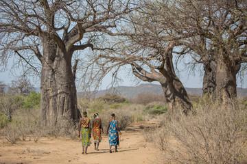 Afrikanische Frauen vor Baobab Baum