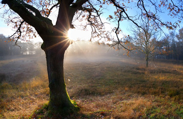 sunrise behind oak autumn tree