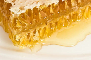 Honey comb on a white plate