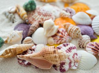 sea shells background