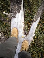 man walking on a tree trunk