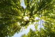 canvas print picture - Sonne strahlt durch Baumkronen