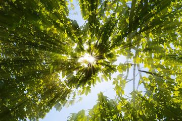 Sonne strahlt durch Baumkronen