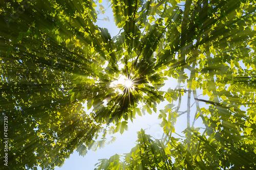 canvas print picture Sonne strahlt durch Baumkronen