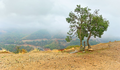 The mystic landscape