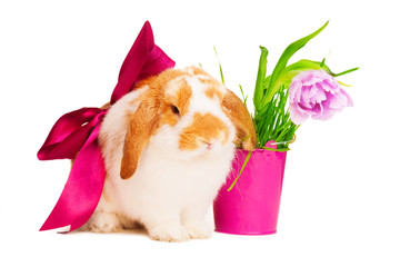 Cute bunny with red silk bow near pink pot