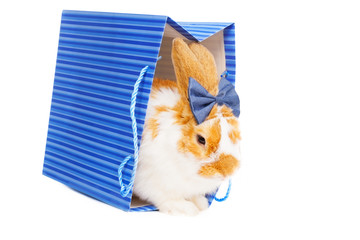 Cute female bunny with bow as gift on background