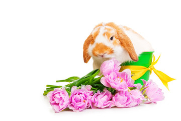 Beautiful rabbit with flowers on white background