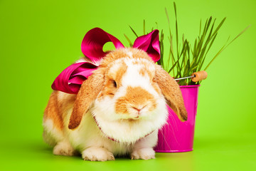 Cute small rabbit with bow on green background