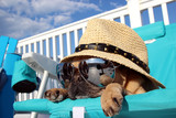 Pug Relaxing in Beach Chair - 74162865