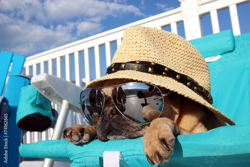 Deurstickers Ontspanning Pug Relaxing in Beach Chair