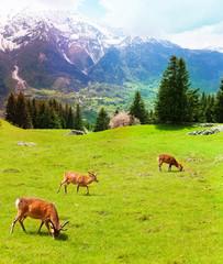 Herd of deer in the mountains