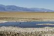Leinwanddruck Bild - bedwater pond