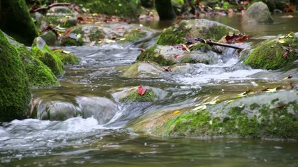 Creek Cascade with Fallen Red Leaves in Fall