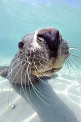 Seal Pups アシカの子供