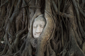 Head of Buddha statue in the tree roots, Ayutthaya, Thailand.