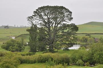 Lake and tree Hobbiton, Matamata, New Zealand