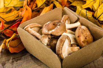 Box of fresh Portobella mushrooms with autumn leaves