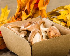 Box of fresh Portobella mushrooms with fall leaves