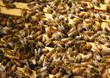 Obrazy na płótnie, fototapety, zdjęcia, fotoobrazy drukowane : Honey Bees in their Hive