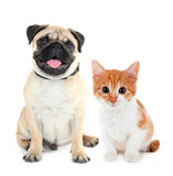 Funny pug dog and little red kitten isolated on white mouse pad