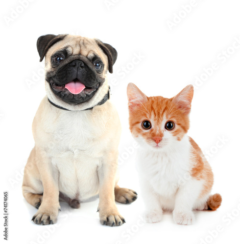Funny pug dog and little red kitten isolated on white poster